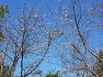 대구수목원에 일반적으로 봄에만 꽃이 피는것이 벚꽃인줄 알고 있는데 가을에도 꽃이 활짝피는 춘추벚나무, 꽃.