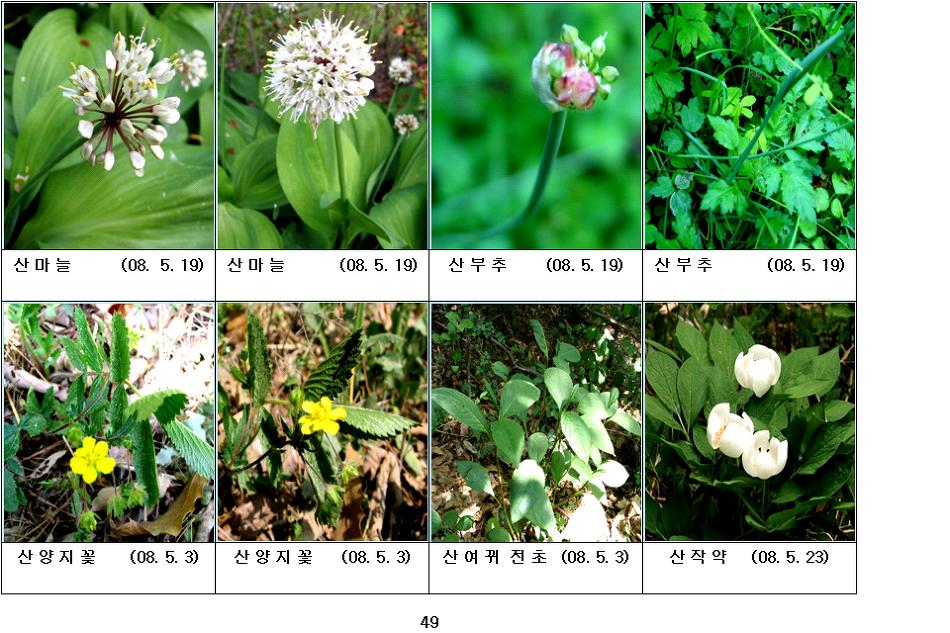 봄에 피는 야생화(5월-13)