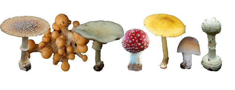 야생버섯 안전하게 먹기